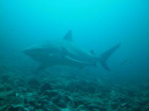 scuba diving bat islands
