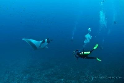 manta rays costa rica
