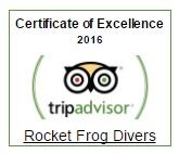 trpadvisor-rocket-frog