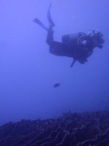 Diver on Zanzibar, by Elzemiek Zinkstok